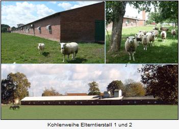 Elterntierstall Horstmann Kohlenweihe
